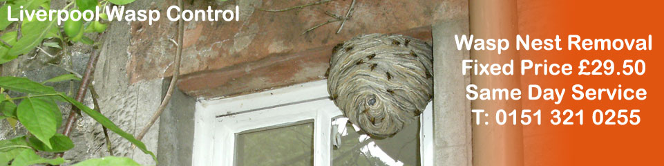 Liverpool Wasp Control - Wasp Nest Removal, fixed price £29.50, Covering Liverpool, Merseyside and Cheshire