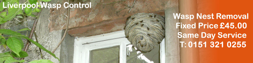 Liverpool Wasp Control - Wasp Nest Removal, fixed price £35.00, Covering Liverpool, Merseyside and Cheshire