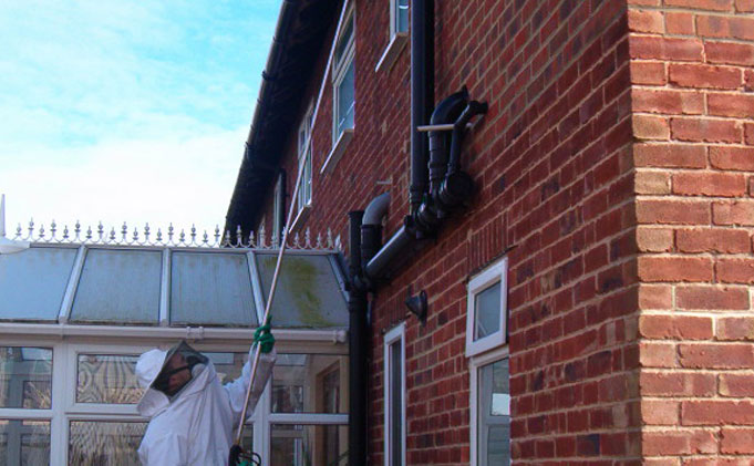 Wasp Nest Treatment in house. Liverpool Wasp Control - Wasp treatment £35, covering Liverpool, Merseyside and Cheshire